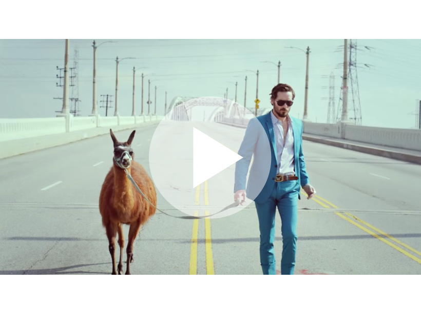 A man in a blue suit wearing Carrera sunglasses crossing a road and leading a llama, with image in rear-view mirror of man in car wearing glasses.